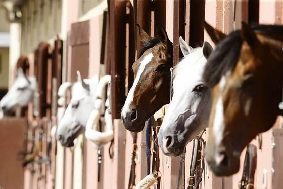 Описание и симптомы гриппа у лошадей, правила вакцинации и профилактика