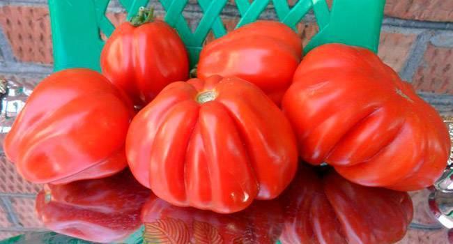 Характеристика и описание сорта томата Пузата хата, его урожайность