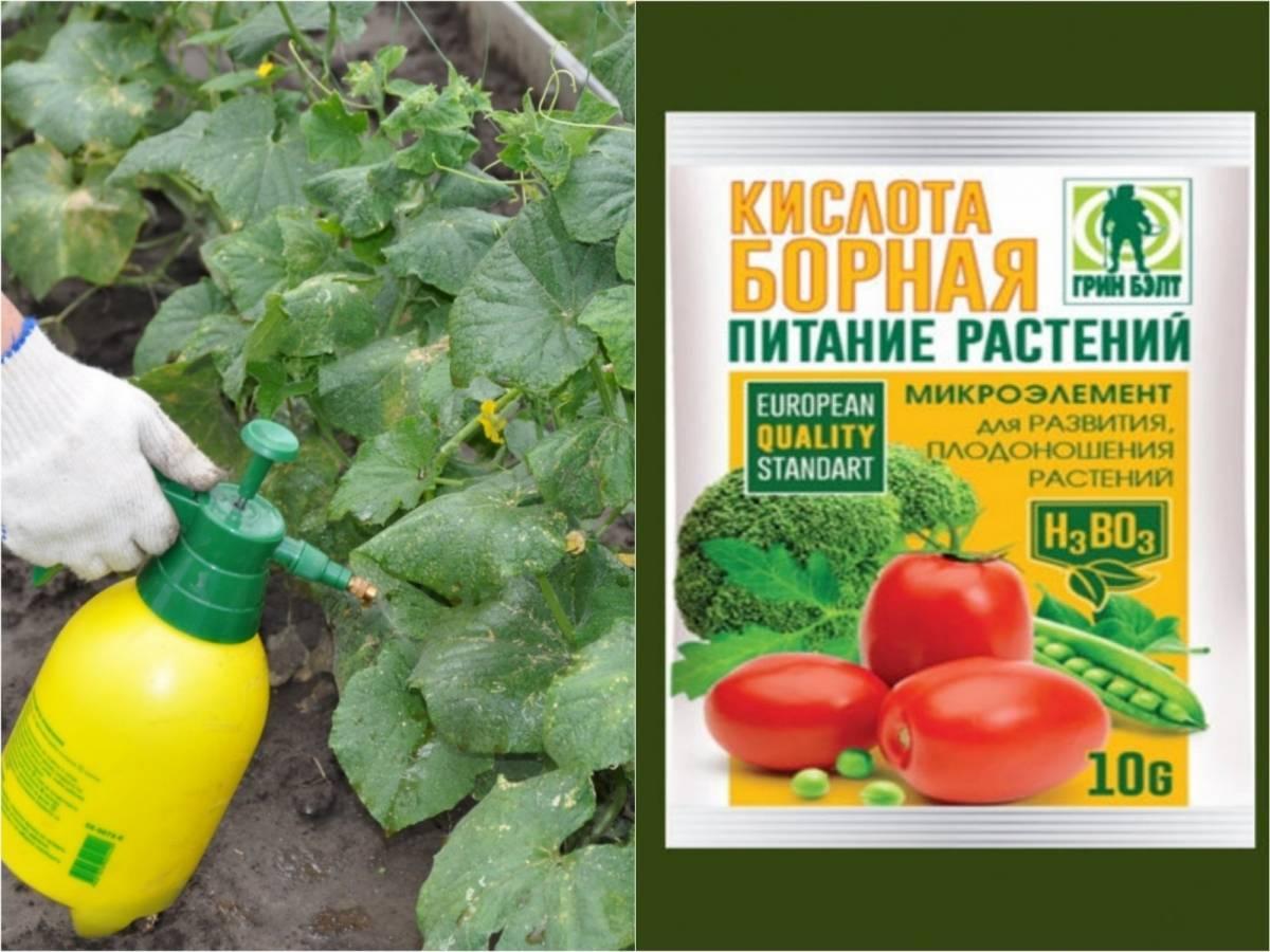 Борная кислота для томатов: 8 рекомендаций по использованию