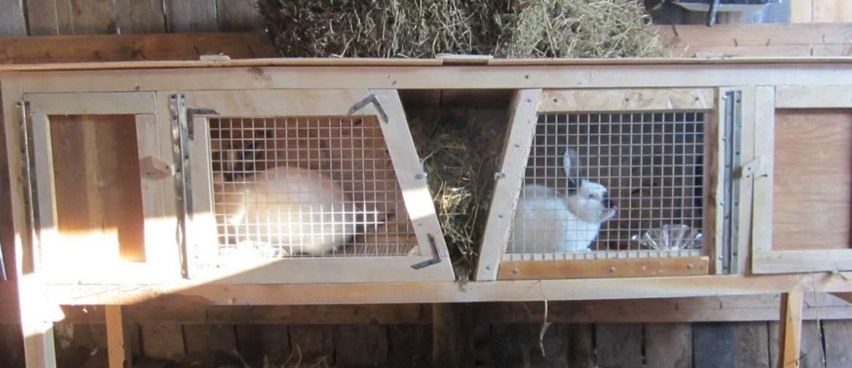 Крольчатник своими руками: от чертежей до воплощения