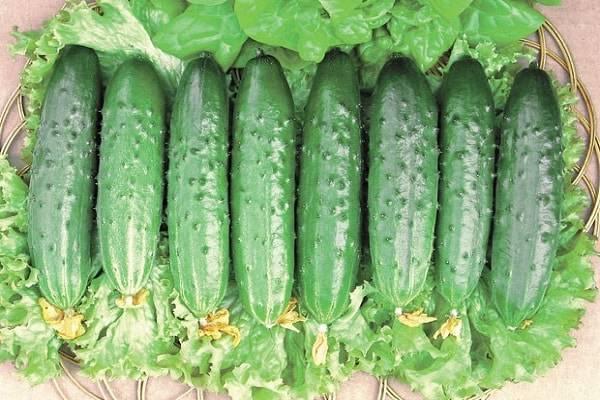 Описание огурцов сорта Эстафета, их выращивание и урожайность