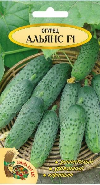 Описание сорта огурца Альянс, рекомендации по выращиванию и ухода