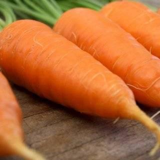 Секреты выращивания и ухода за морковью в открытом грунте, чтобы был хороший урожай