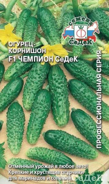 Описание сорта огурца Борисыч, его характеристика и урожайность