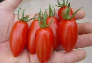 Совершенный томат: подробное описание гибрида сагатан f1 и советы по выращиванию