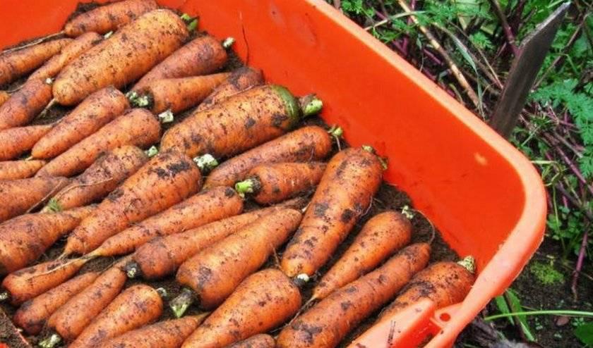 Как хранить овощи без погреба: доступные альтернативы