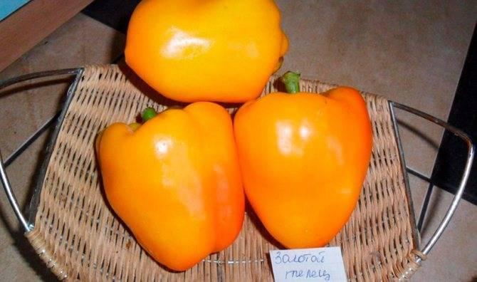 Лучшие сорта желтого перца: описания с фото, характеристики и особенности
