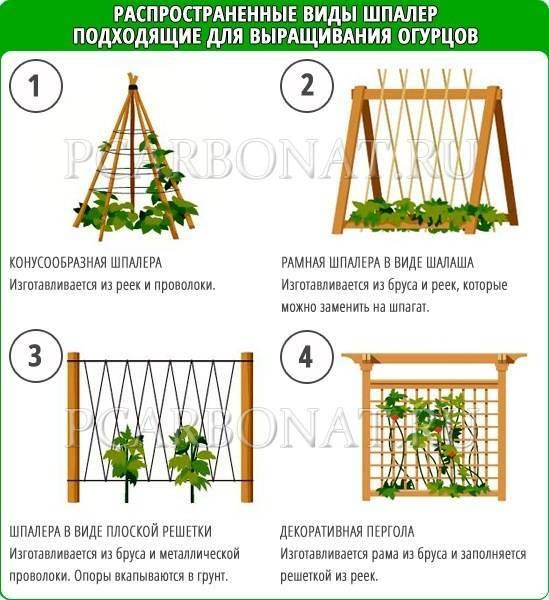 Выращивание и формирование огурцов на шпалере в теплице и открытом грунте