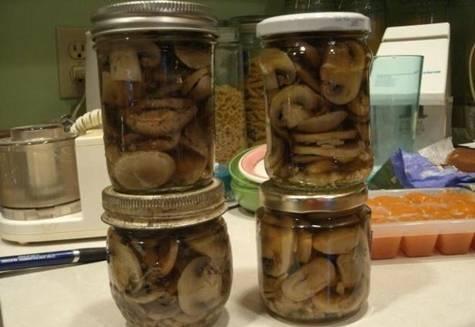 Рецепты как солить грузди скрипуны на зиму в банках горячим и холодным способом