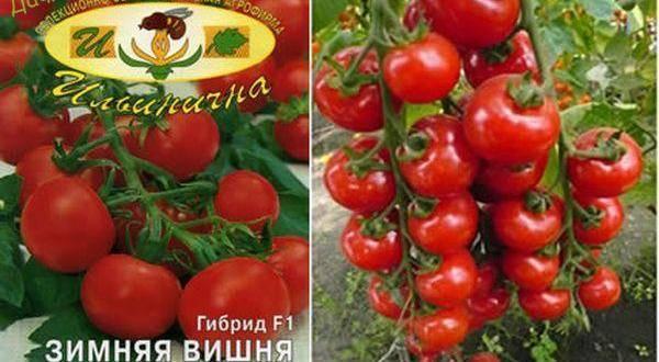 Томат вишенка: характеристики и описание сорта, урожайность