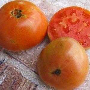 Всё о среднепоздних сортах томатов: за что мы их любим и как правильно их выращивать