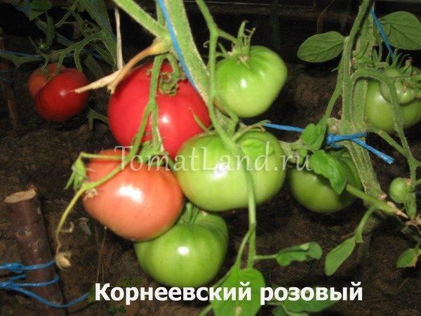 Томат корнеевский описание и характеристика сорта с фото