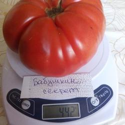 Агротехника и характеристика очень крупного сорта томатов бабушкин секрет