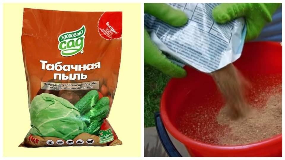 Применение табачной пыли как удобрения на огороде и защиты от вредителей
