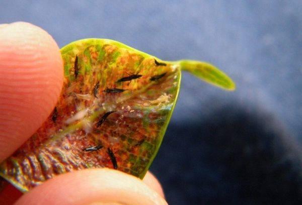 Чем опрыскать огурцы от вредителей в теплице и открытом грунте