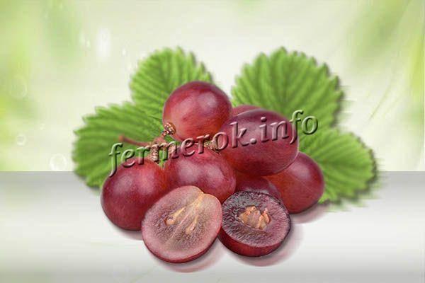 Виноград анюта – характеристика, описание ухода