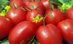 11 интересных сортов томатов, которые я вырастила в этом году