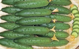 Позднеспелые сорта огурцов для открытого грунта: описание сортов с фото