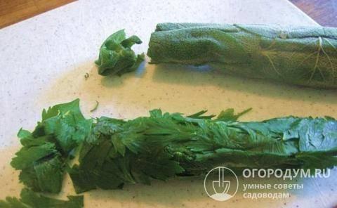 Заготовка витаминов на зиму. как хранить петрушку в домашних условиях?
