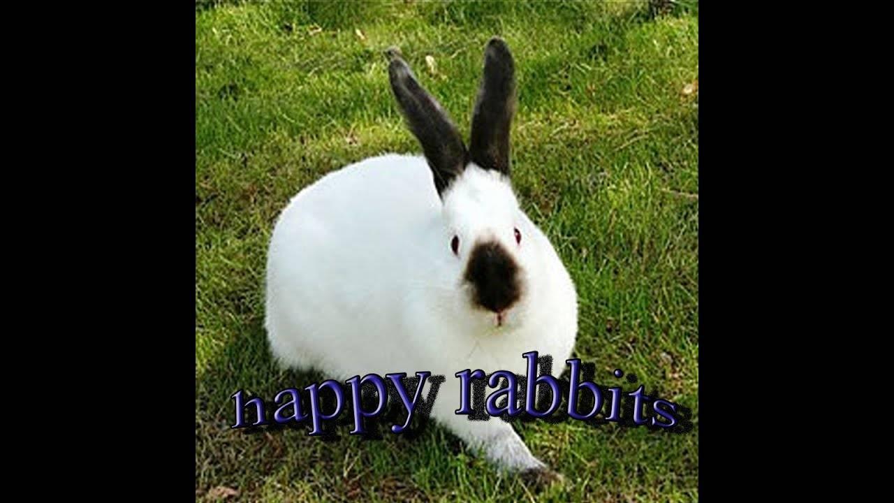 Почему крольчиха съедает своих крольчат?