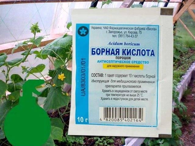 Применение, дозировка и правила подкормки огурцов борной кислотой