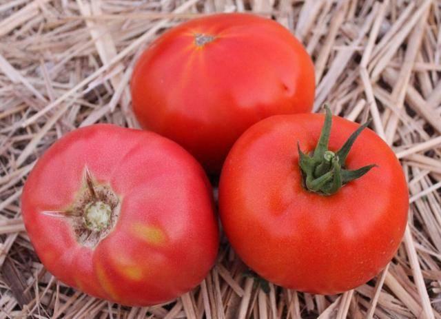 Томат королевич: описание и характеристика сорта, мнение садоводов с фото