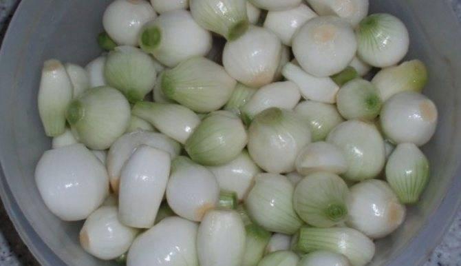 ТОП 13 рецептов, как можно заготавливать зеленый лук на зиму