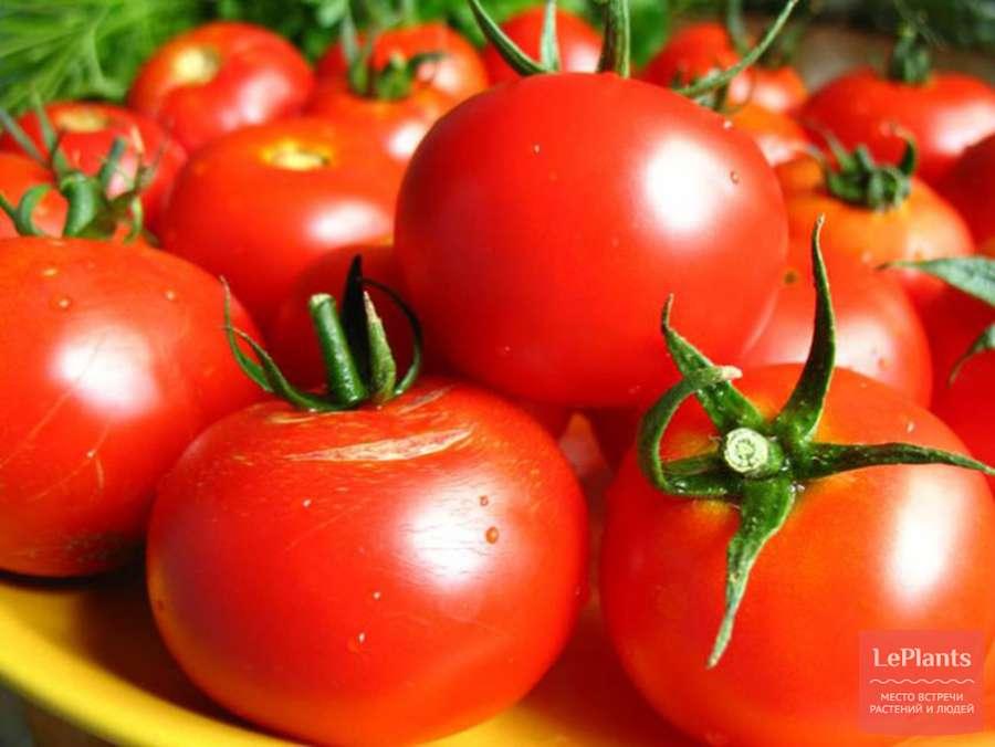 Фото, отзывы, описание, характеристика, урожайность гибрида томата «обские купола f1»