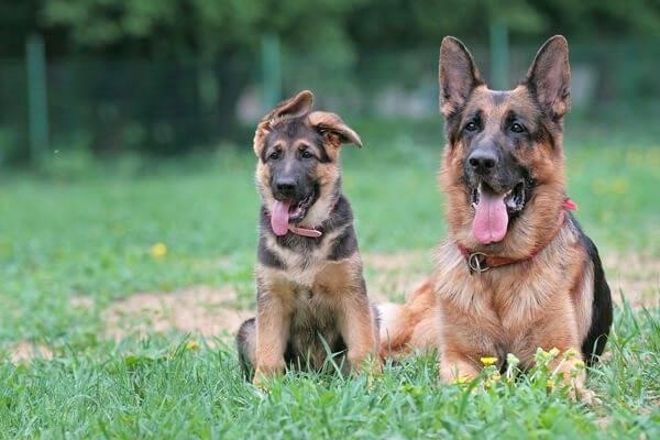 Клички для больших собак