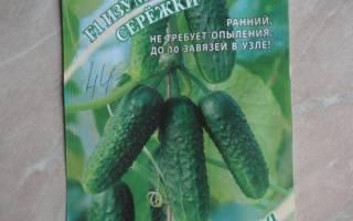 Огурец «изумрудные сережки f1»: идеальный сорт для получения пикулей и корнишонов