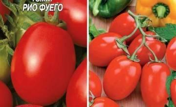 Томат транс рио: описание и характеристики сорта, выращивание с фото