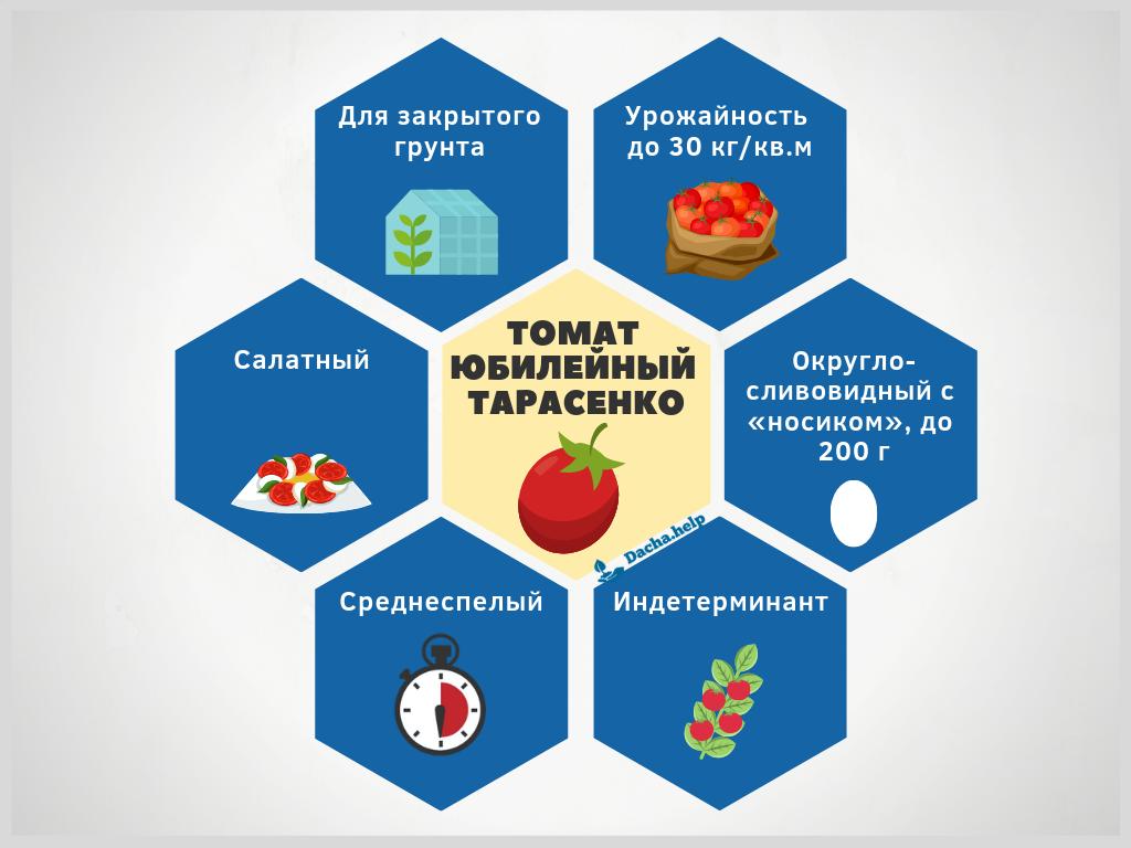 Томат «юбилейный тарасенко»: очень урожайный и такой же популярный