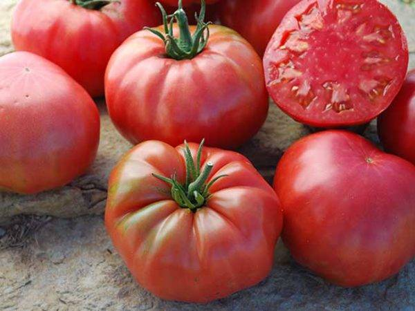 Описание сорта томата tmag 666 f1, характеристика и способы выращивания