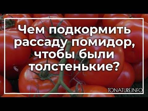 Секрет крепкой рассады помидоров: чем подкормить?