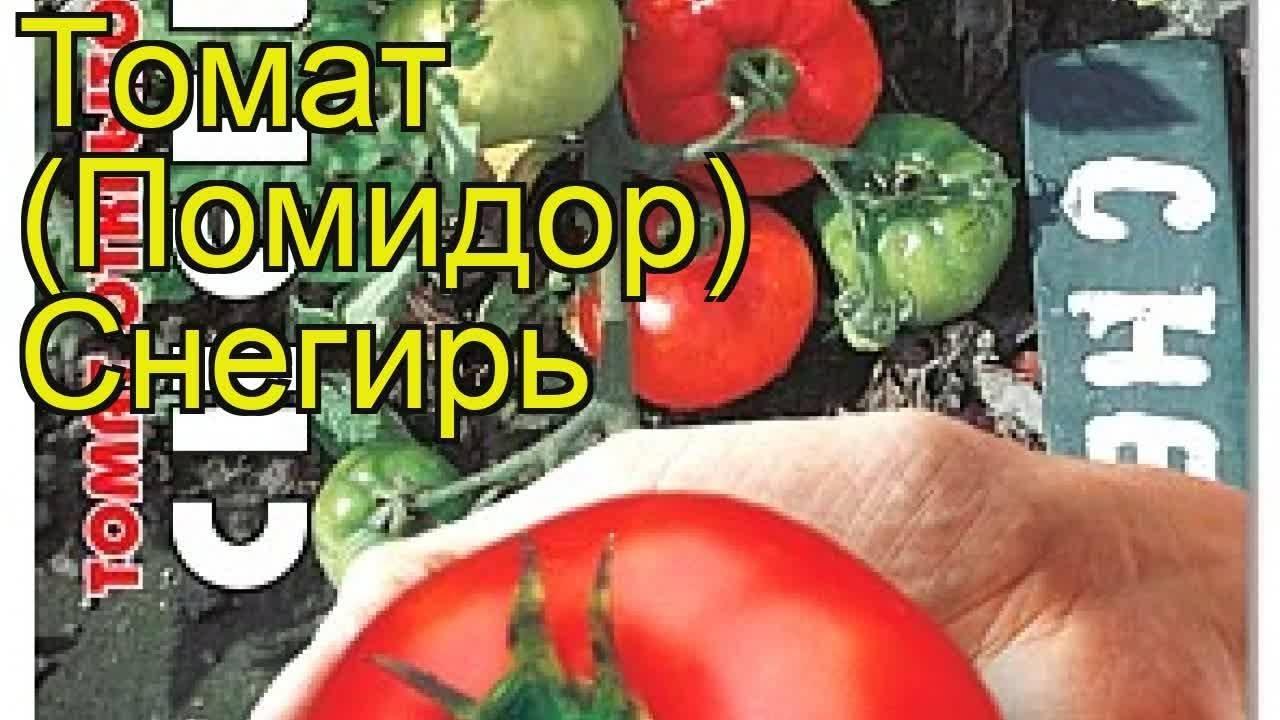 Обзор томатов сорта снегири