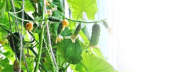 Польза удобрений для гидропоники, правила приготовления питательного раствора в домашних условиях