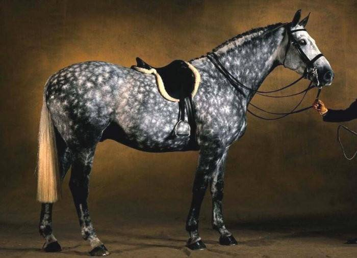 Какие бывают породы лошадей?