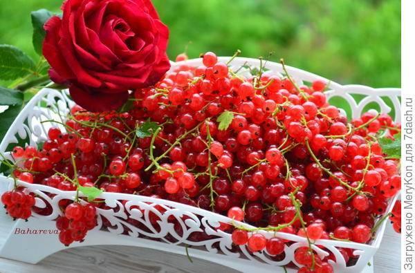 Джем из красной смородины: классические рецепты без загустителей