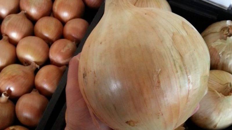 Описание лука сорта Халцедон, его характеристика и выращивание из семян