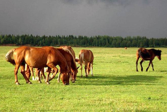 Термометрия лошадей – выявление патологических состояний
