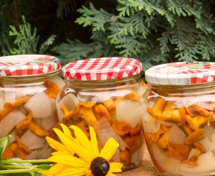 Заготовки из грибов лисичек на зиму: лучшие рецепты. маринованные, соленые, жареные, замороженные лисички, в томатном соусе, икра, солянка из лисичек на зиму: рецепты приготовления. сколько варить лисички перед маринованием, засолкой, заморозкой на зиму?