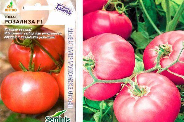 Высокоустойчивый сорт (гибрид) томата голландской селекции «розализа f1»: описание, характеристика, посев на рассаду, подкормка, урожайность, фото, видео и самые распространенные болезни томатов