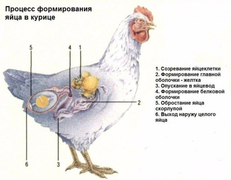 Яйца измельчали — что делать?