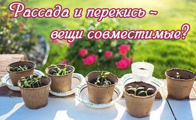 Перекись водорода для растений — ускоряем рост растений и улучшаем корневую систему при помощи этого средства.