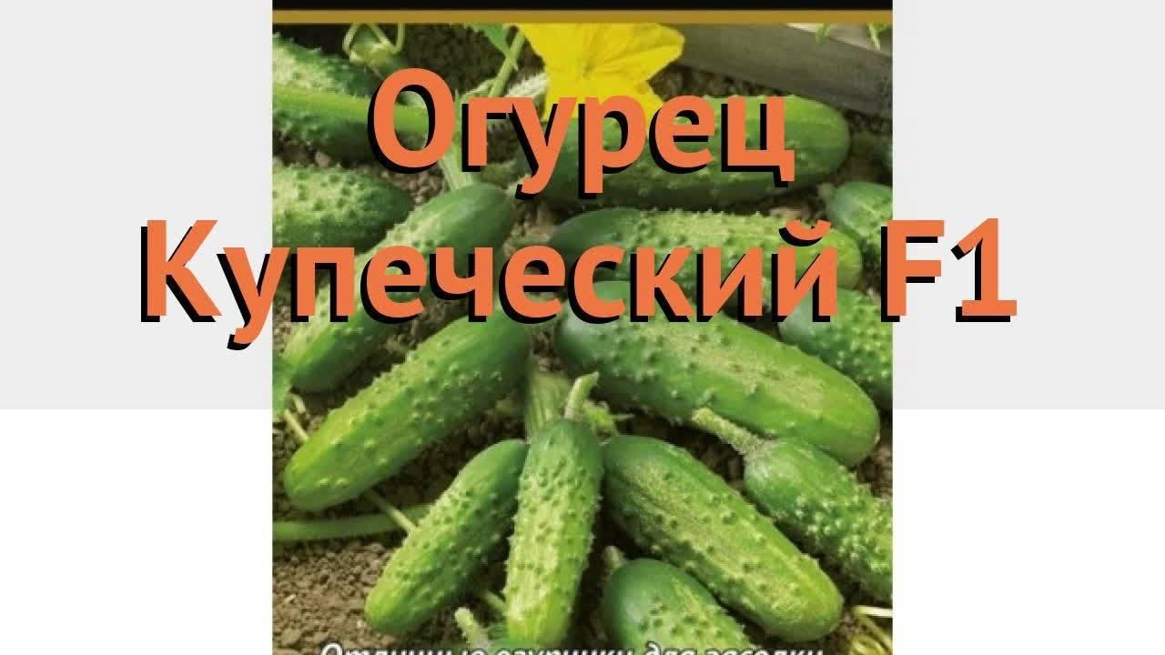 Описание сорта огурцов Купеческий, особенности выращивания и ухода