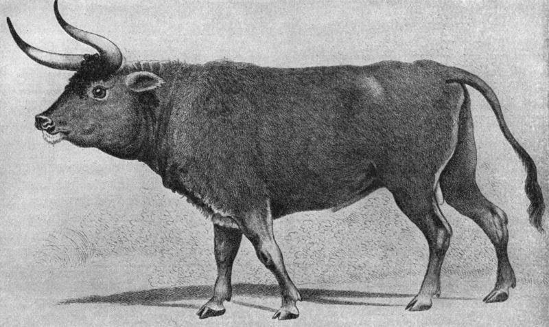 Черная книга россии: 5 истребленных животных, когда-то обитавших на территории нашей страны