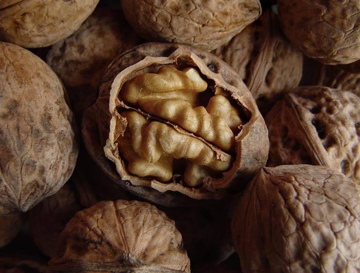 Как привить грецкий орех