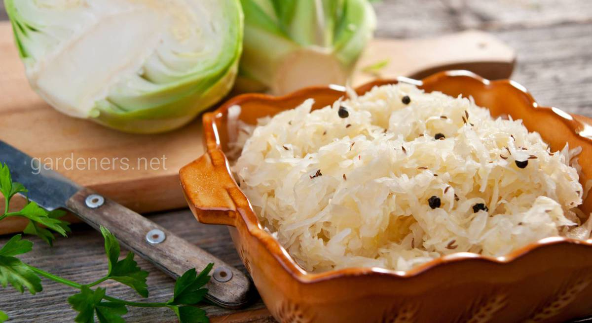 Квашенная капуста: 5 рецептов приготовления хрустящей капусты быстрого приготовления