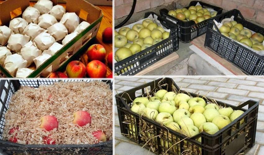Как правильно хранить яблоки на зиму в домашних условиях, лучшие способы и сроки