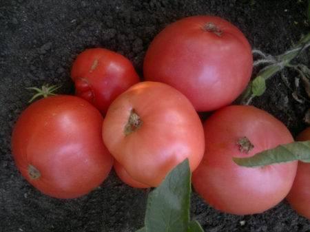 Характеристика и описание сорта томата Красная Гроздь, его урожайность